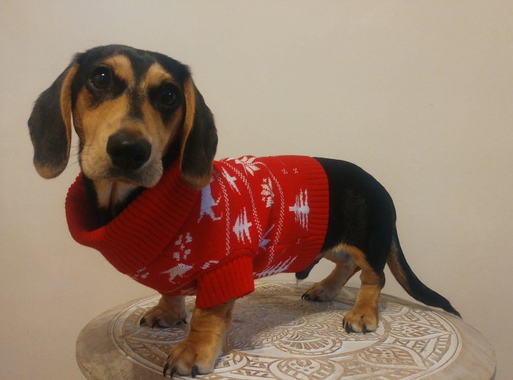 Click to enlarge image doggie_sweater_knitted.jpg